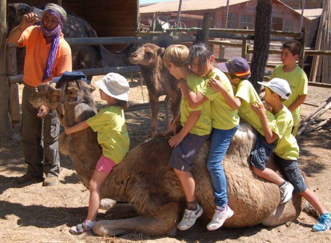 Una Apasionante Experiencia A camello por el parque dunar de Doñana